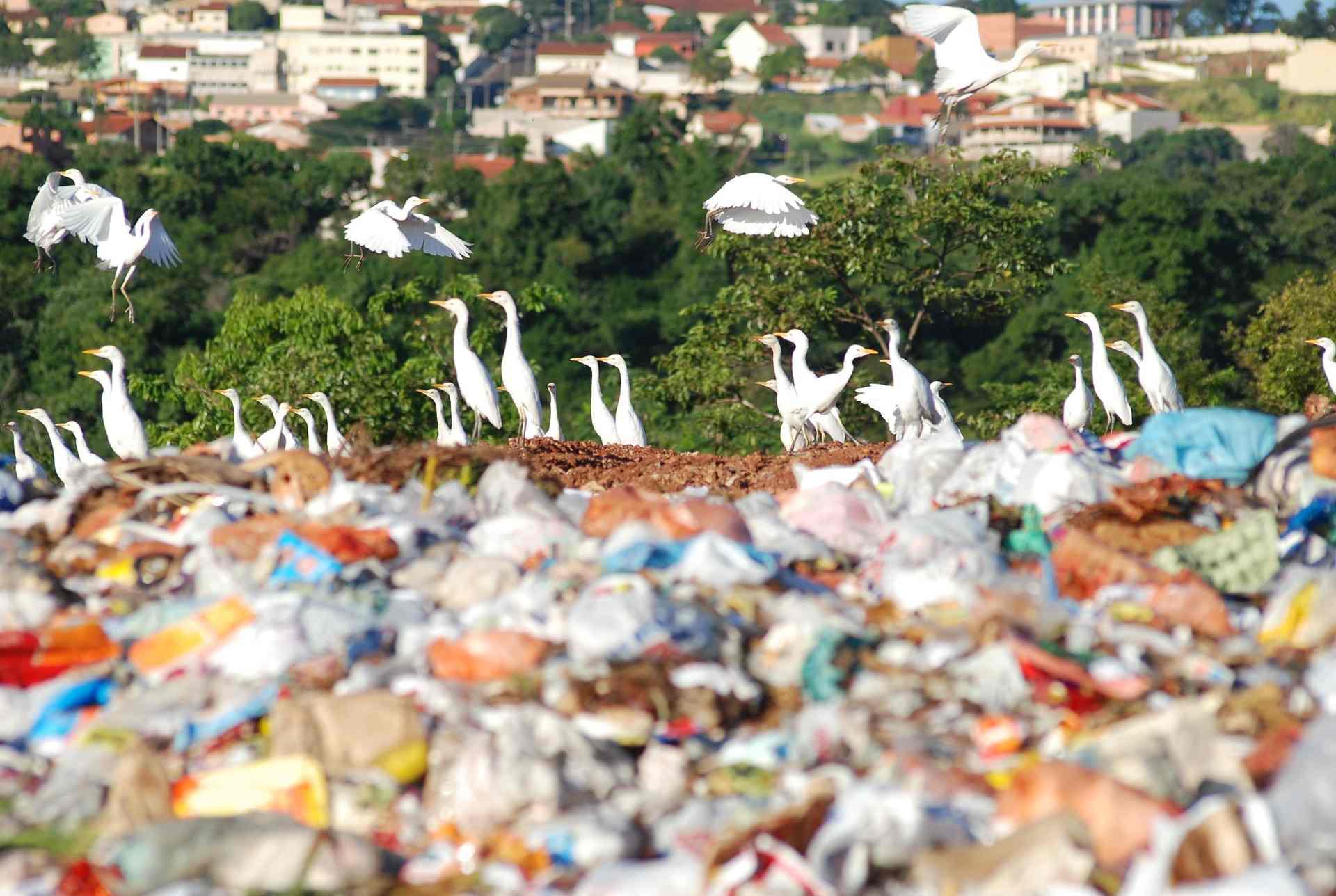 Read more about the article Pontos de Disposição Irregular no Brasil