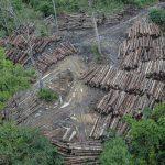 COMO A ECONOMIA LINEAR INFLUENCIA NO DESMATAMENTO NA AMAZÔNIA